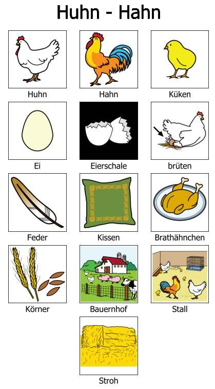 Wörter zum Thema Huhn