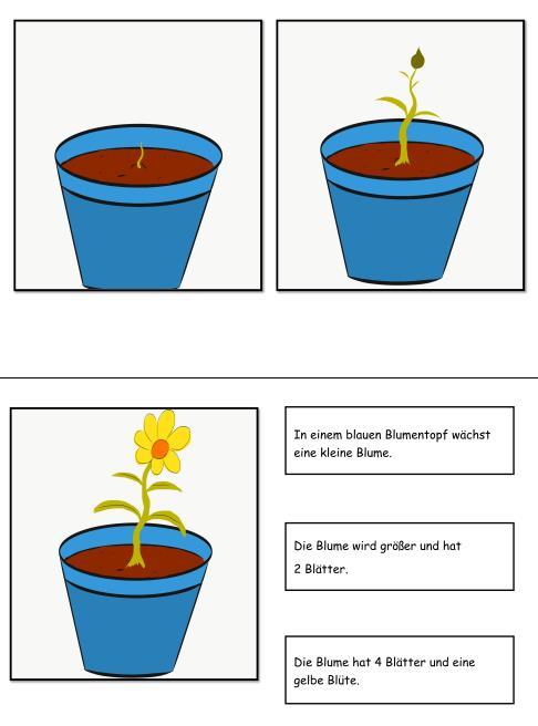 Bildergeschichte 3 Bilder - Eine Blume blüht