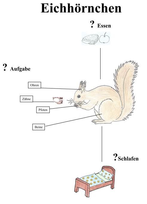Das Eichhörnchen und seine Besonderheiten