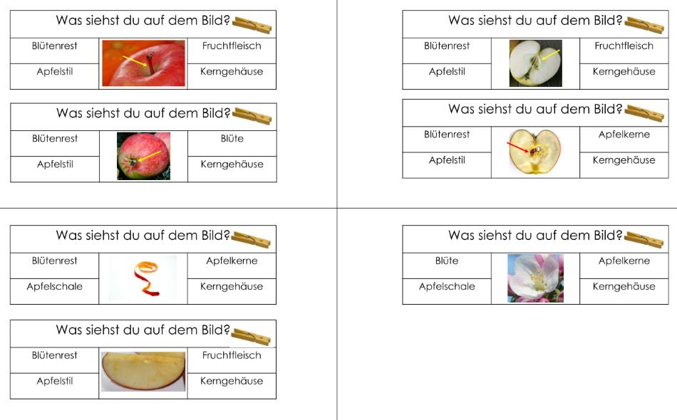 Klammerkarten zum Aufbau eines Apfels
