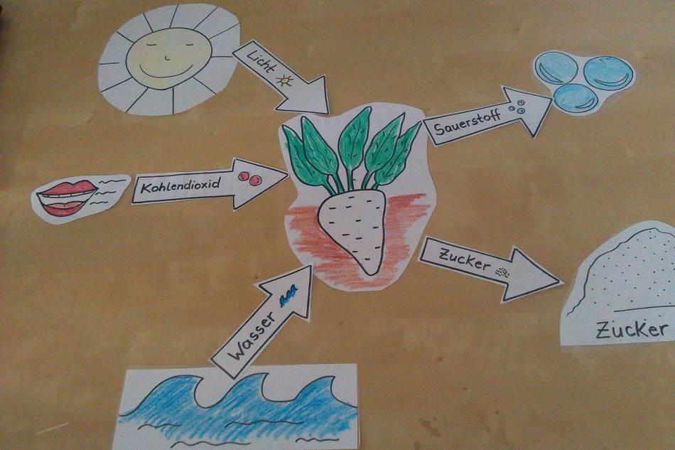 Schaubild - Arbeitsblatt zur Photosynthese