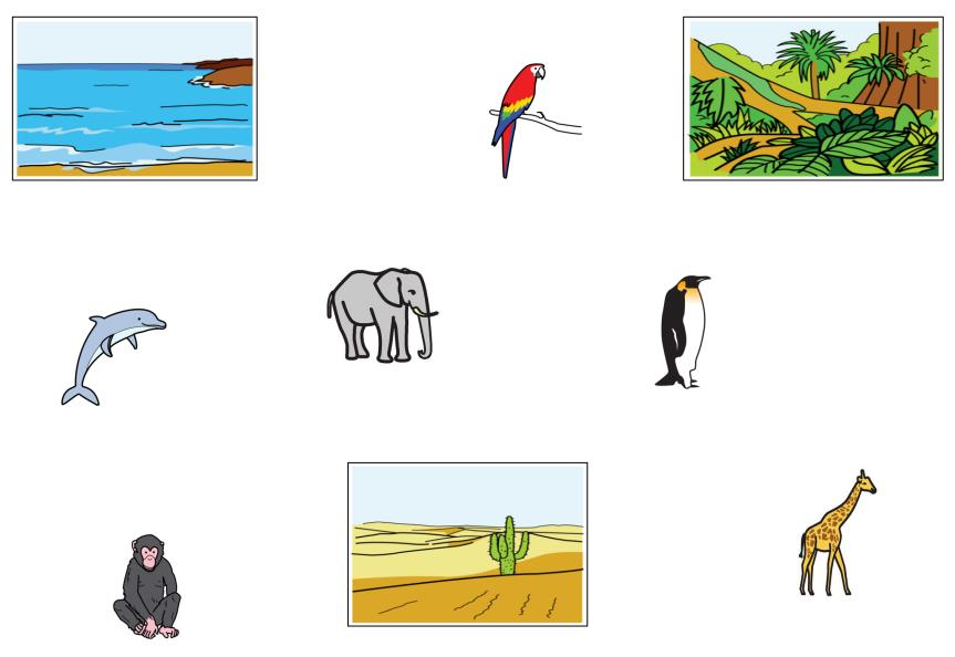 Zoo - Wo kommen die Tiere her?