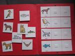 Aufgabenmappe - Kategorienbildung mit Tieren