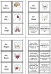 Zuordnungskarten - Organe, Bilder und ihre Funktionen